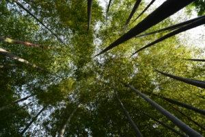 等々力渓谷の竹林