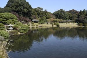 日本式庭園池