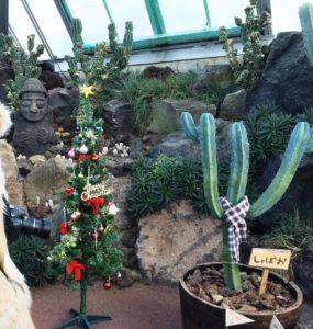 クリスマスツリーとサボテン