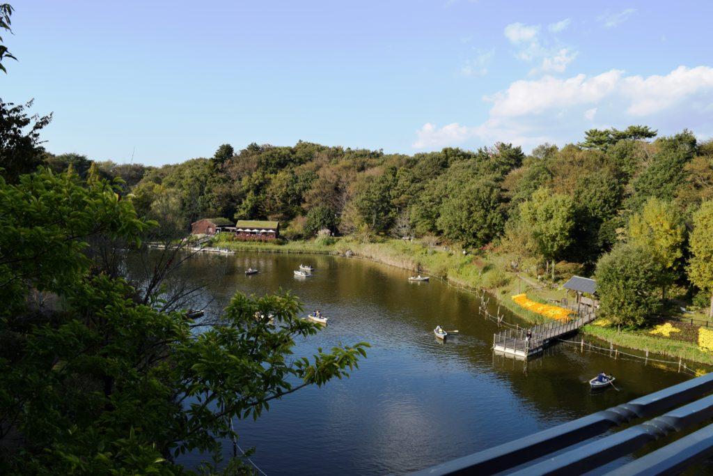 橋の上から見下ろす池