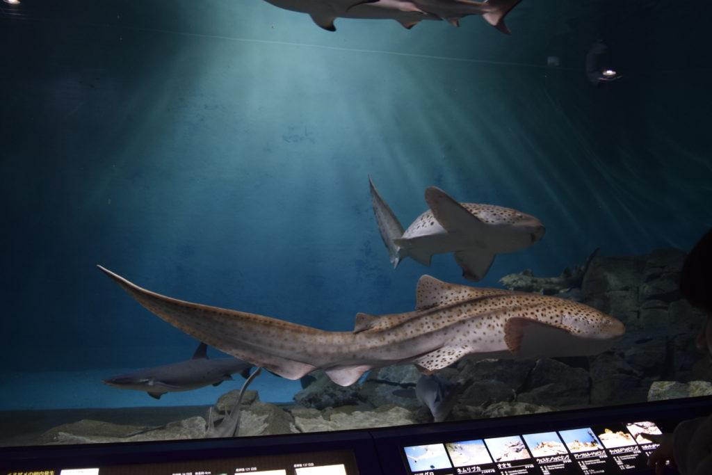 サメの水槽