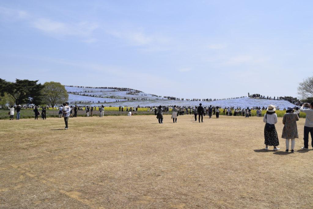 閉園時間 国営ひたち海浜公園