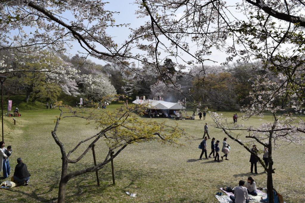 桜祭りの様子
