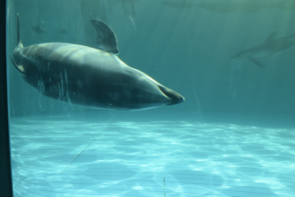水中のイルカ
