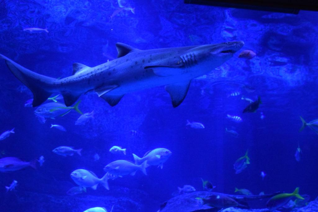 すみだ水族館東京の海