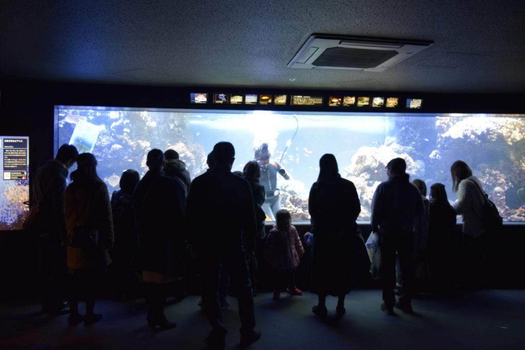 水族館イメージ