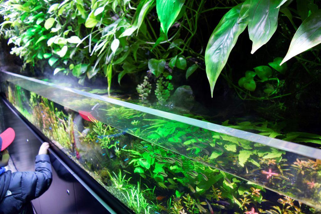 魚の環境をイメージした水槽