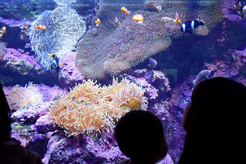 サンゴたち