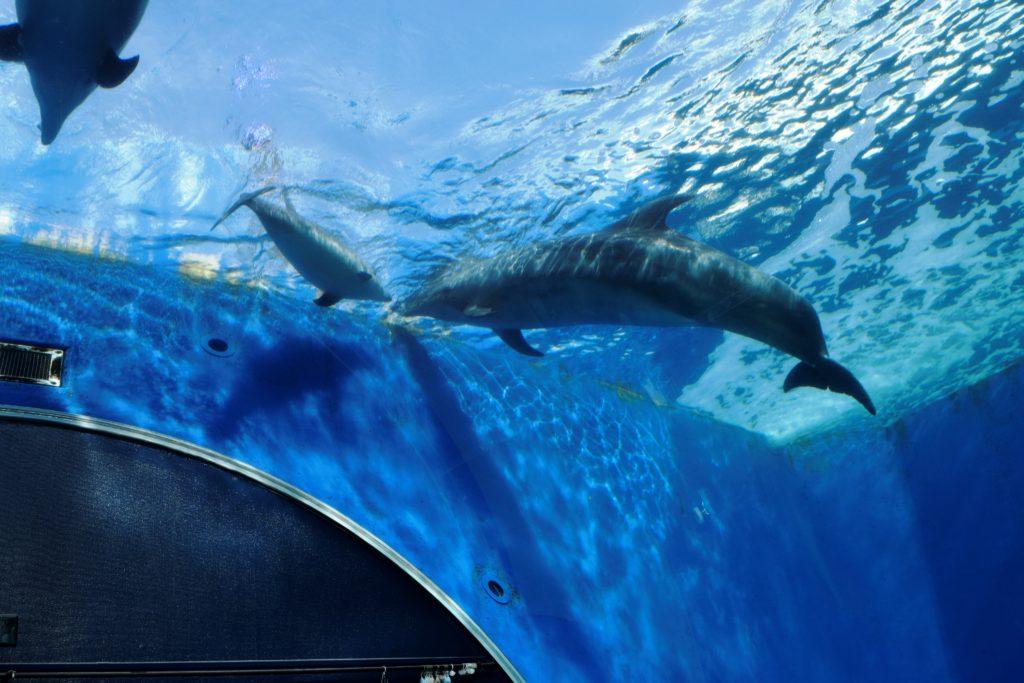 頭上を泳ぐイルカ