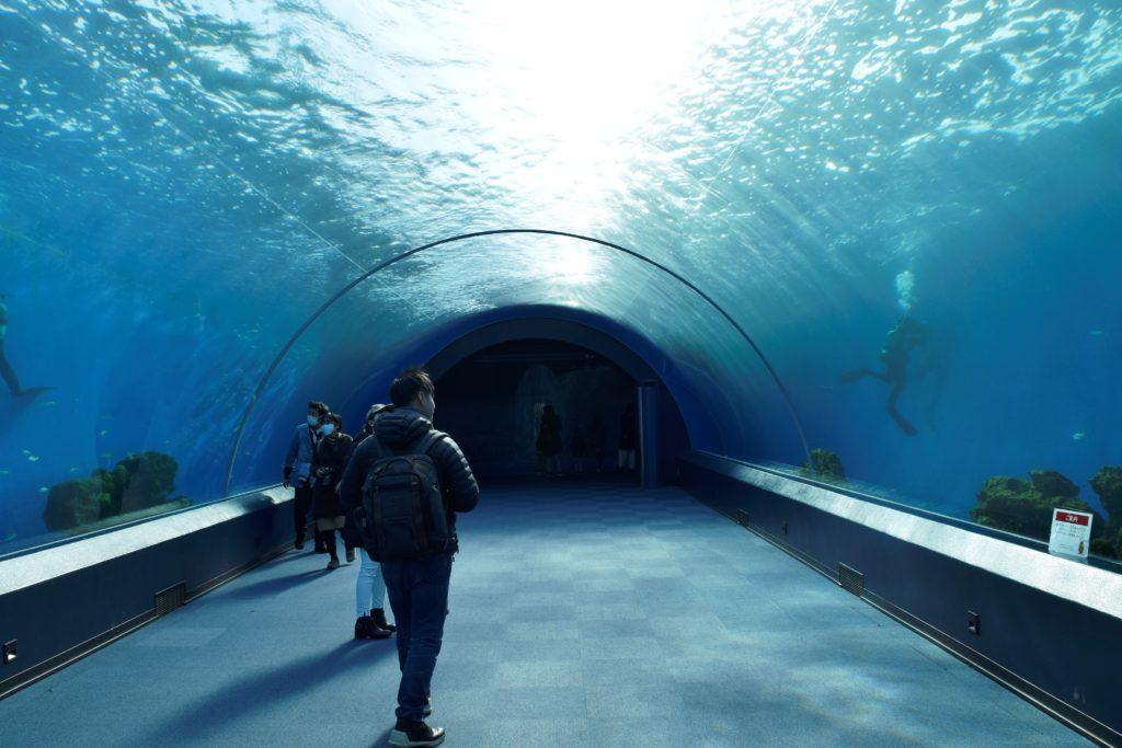 イルカのトンネル