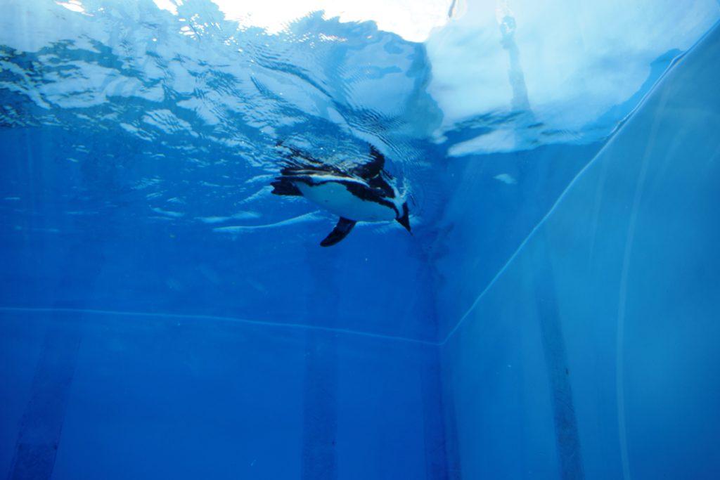 トンネルから見たペンギン